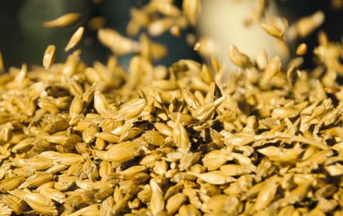 Das von Ihnen  angelieferte Getreide wird von uns fachmännisch und marktgerecht aufbereitet und gelagert.