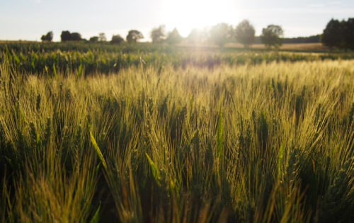 Zu jeder Jahreszeit und zu jedem Bedarf liefern und beraten wir hochwertige Produkte und Dienstleistungen für den qualitätsorientierten Landwirt und Gärtner.