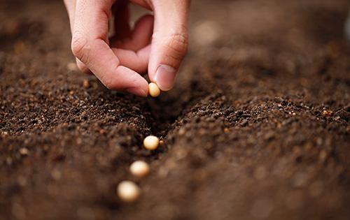 Das Z-Saatgut ist ein zertifiziertes und geprüftes Saatgut, das dem Erzeuger einen höheren Ertrag bringt.